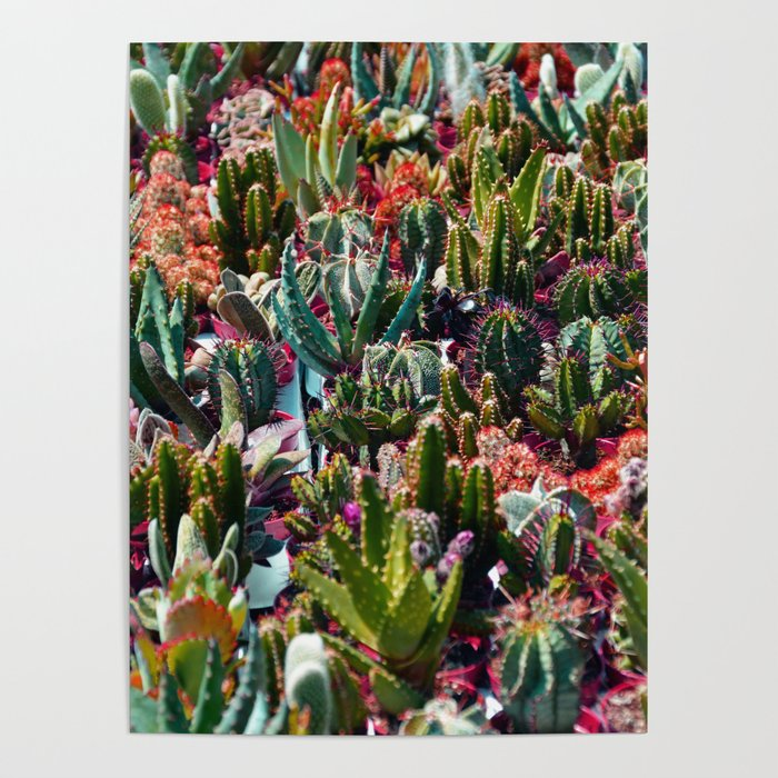 Cactus Garden Poster By Colorandpatterns Society6