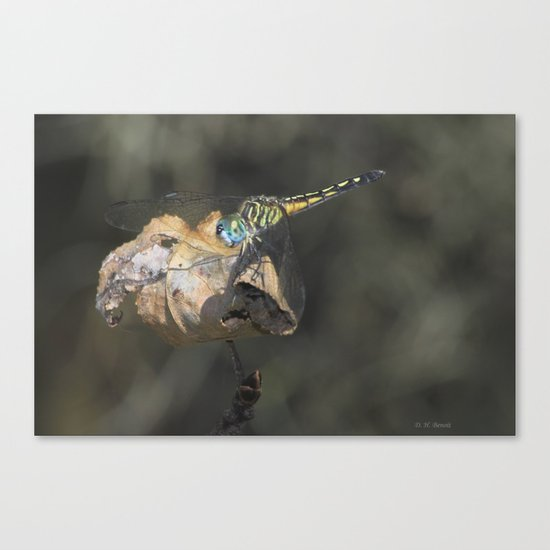 Dragonfly With Blue Canvas Print