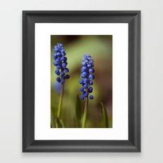 spring lavender Framed Art Print