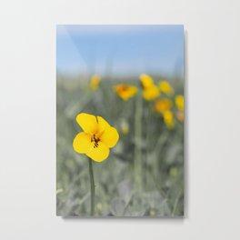 Flower of the Field Metal Print