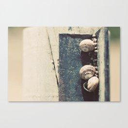 Snail family Canvas Print