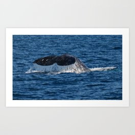 Zoom of Whale Near Dana Point Art Print