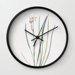 Vintage Siberian Iris Illustration Wall Clock