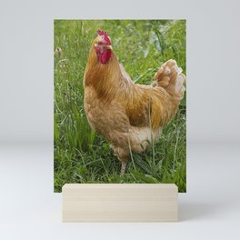 hen in the grass Mini Art Print