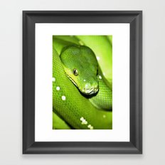 Green Python Portrait 3 Framed Art Print