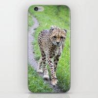 jaguar iPhone & iPod Skins featuring Jaguar by Veronika
