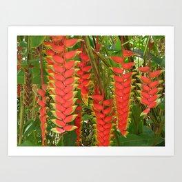 Maui Heliconia Art Print