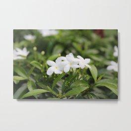 Water Jasmine Metal Print