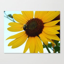 Sunshine&Sunflowers Canvas Print