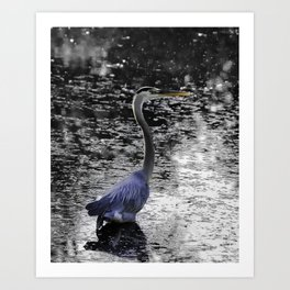 Great Blue Heron near Canandaigua Lake Art Print