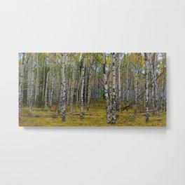 Trembling Aspen's in the Fall, Jasper National Park Metal Print