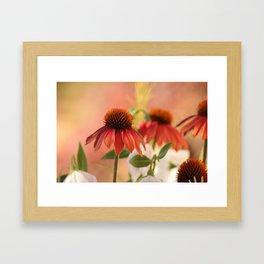 Dramatic cone flowers Framed Art Print