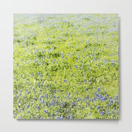 Texas Bluebonnet Field Metal Print