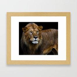 Lion I Framed Art Print
