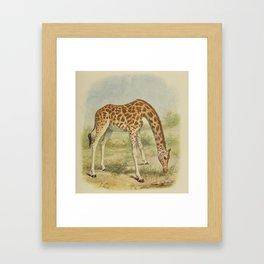 Vintage Giraffe Illustration (1903) Framed Art Print