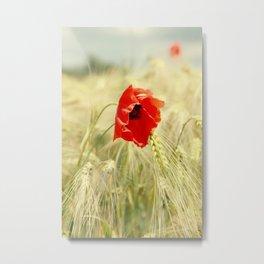 Poppy in the grain field Metal Print