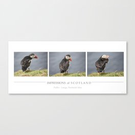 [impressions of scotland] - puffin trilogie Canvas Print