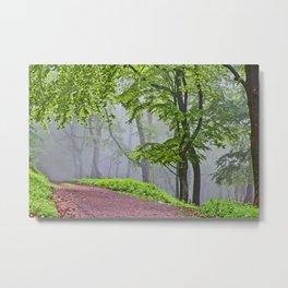 Path into the fog Metal Print