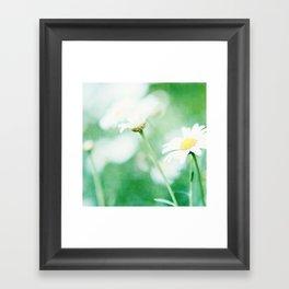 Daisy Crazy Framed Art Print