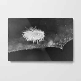 A Single Soft Wet Feather. Droplets on spider web. Selective focus. Metal Print