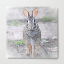 Bunny Trail Metal Print