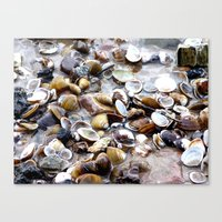 shells Canvas Prints featuring Shells by Anne Seltmann