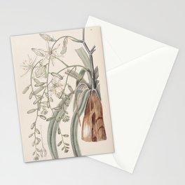 Flower 028 ornithogalum divaricatum Straggling Star of Bethlehem25 Stationery Cards