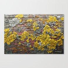 Colorful bark Canvas Print