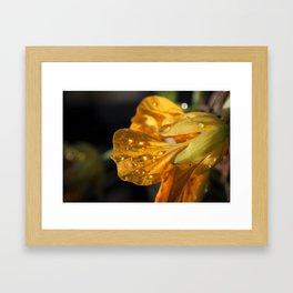 Raindrops on Flower 2 Framed Art Print