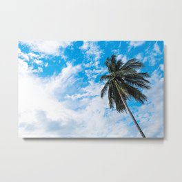 Palm Tree under Blue and White Metal Print