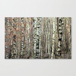 Birkenwald im Winter Canvas Print