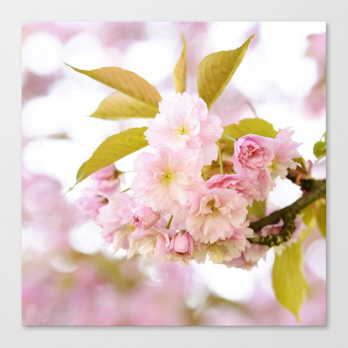 Sakura - Cherryblossom - Cherry blossom - Pink flowers on #Society6 Canvas Print