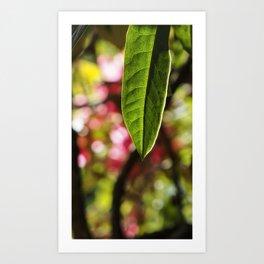 Single Green Leaf Art Print