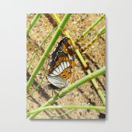 Butterfly and horsetail Metal Print