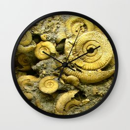 Fossils - Ammonite - Coiled Cephalopods  Wall Clock