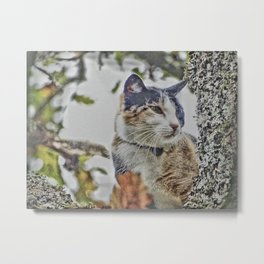 Cat in the Tree Metal Print