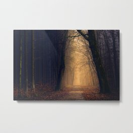 Forest at night with trees in black woods Metal Print