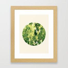 Spring Green Japanese Maple Round Photo Framed Art Print