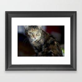 Dolce the Cat Framed Art Print
