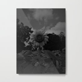 HD Black and White Sunflower Metal Print