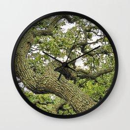 Live Oak of Coastal Texas Wall Clock