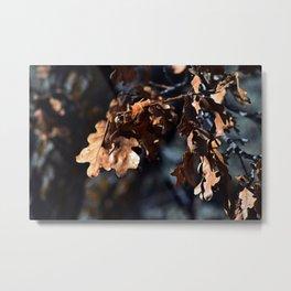 Winter oak leaves Metal Print