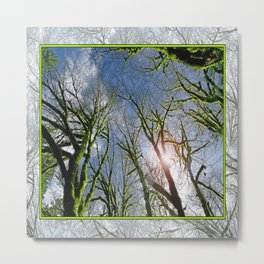 RAIN FOREST MAPLES REACHING FOR THE SKY Metal Print