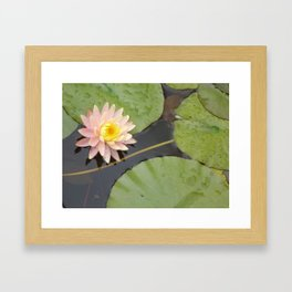 Waterlily Framed Art Print