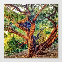 The life of a tree Canvas Print