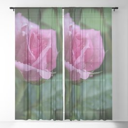 Pink Rose with Drops Sheer Curtain