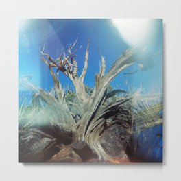 Joshua Tree Metal Print