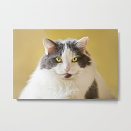 Big Kitty Metal Print