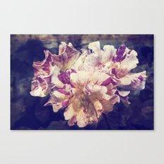 roses in tha garden Canvas Print