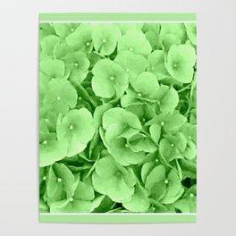 Flowers | Flower | Hydrangea Greenery | Floral | Nadia Bonello Poster